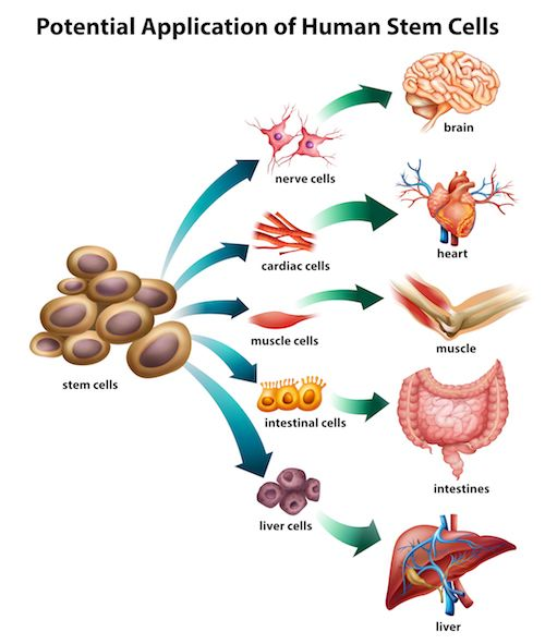 stem cell injection uses